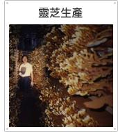 台北石碇靈芝農場民宿-靈芝樟芝生產工廠製程